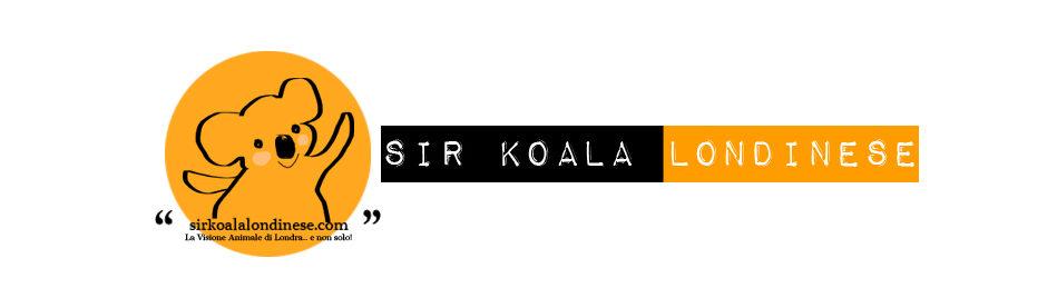 Sir Koala Londinese